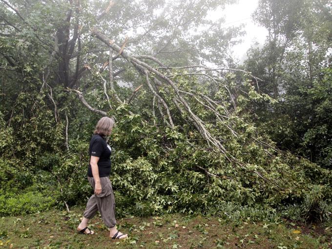 Fallen tree Margaret Street residence  PHOTO: Doug Spowart