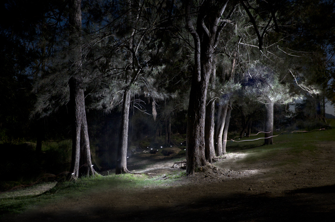 Sheaoak grove light paint