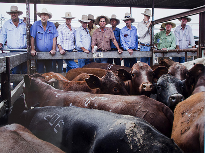 Kimberley McCosker Potential buyers survey a pen of cattle at the Dalby sale yards. The weekly auctions are Australia's larget one-day cattle sale, with over 6,000 head of cattle passing through each week....Photo: Kimberley McCosker