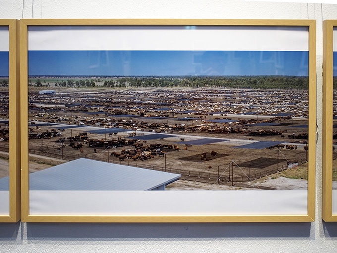 Grassdale Feedlots ... Photo installation (detail): Victoria Nikolova