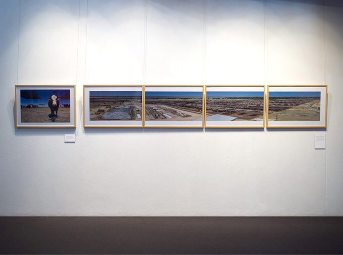 Grassdale Feedlots ... Photo installation: Victoria Nikolova