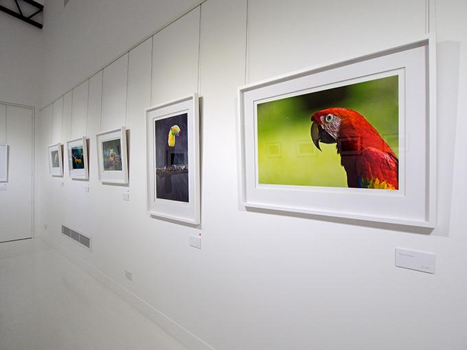 Maud Gallery installation