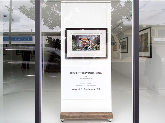 Maud Gallery window