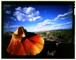 Pinhole 4×5 Chrome film exposed in a film box by VictoriaCooper