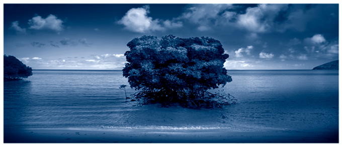 Mangrove Blue – Orpheus Island 2005