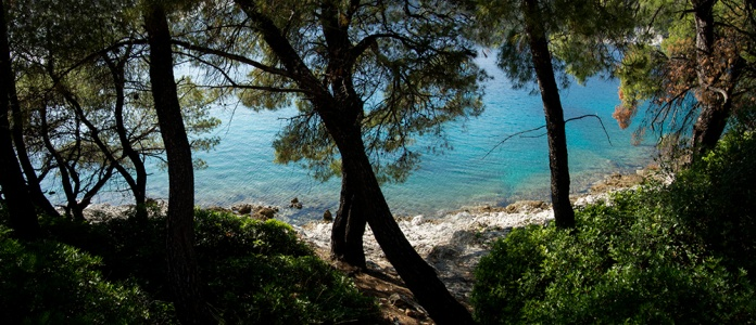 Pines on the shore near Agnonda