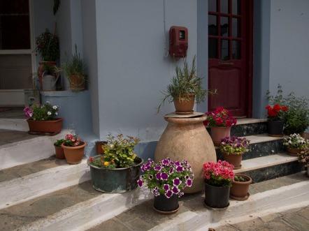Glossa pot plants