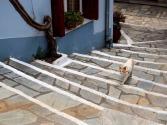 Glossa steps