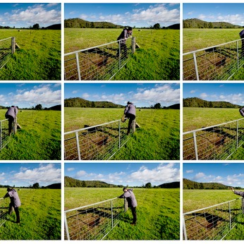 Vicky jumps a fence on the Bundanon property