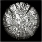 Eamonn Jackson 'Fractal Forest' 2018 88 x 88cm