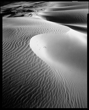 Moreton Island dune