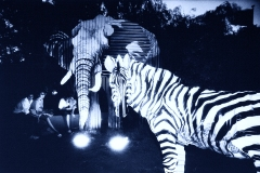 EXPO88 Nocturne Zebra Photo by Y. Regami (a.k.a. Doug Spowart)