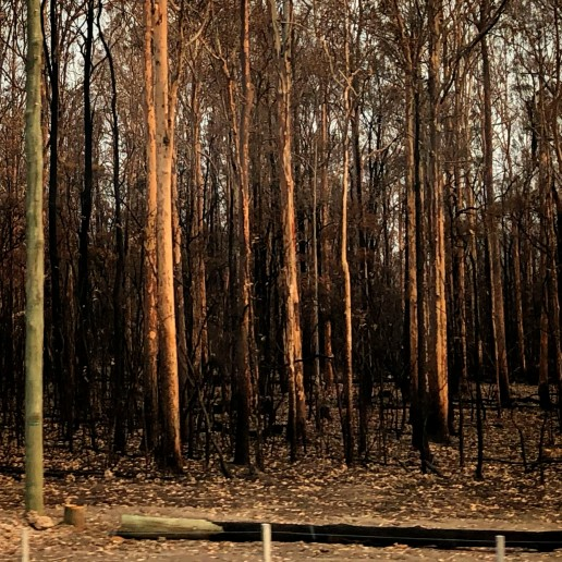 Fired forest near New Italy, northern NSW PHOTO: Victoria Cooper ©