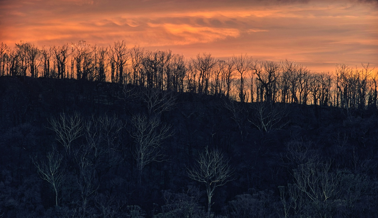 Ghostly trees at sunset