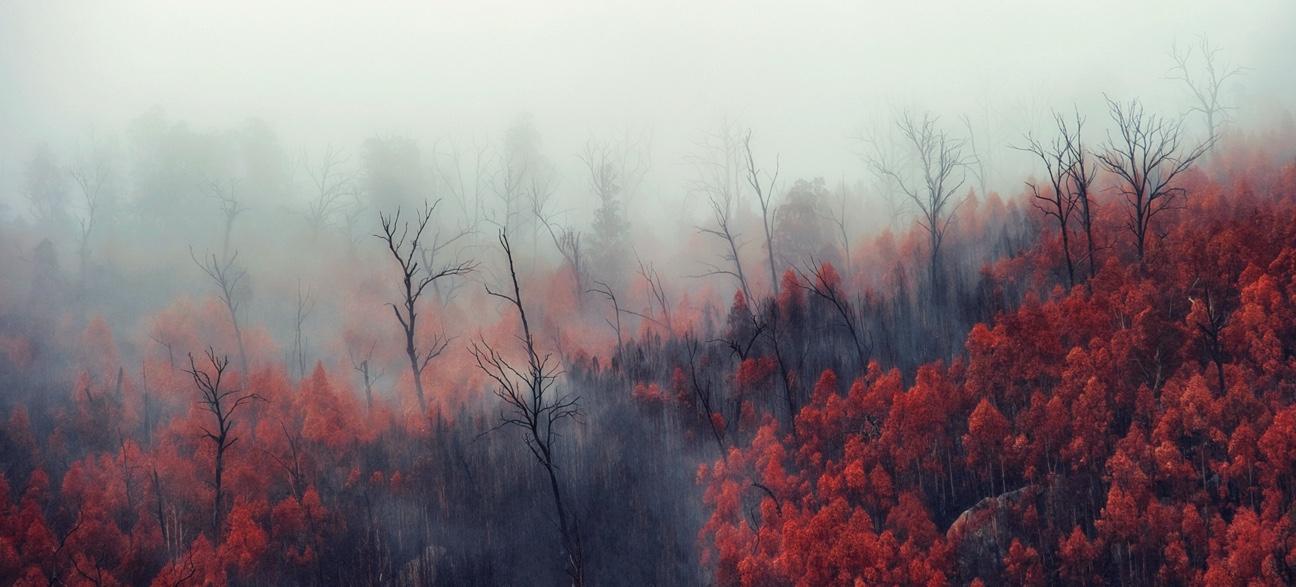 Bushfire damaged trees in the mist, Namadji