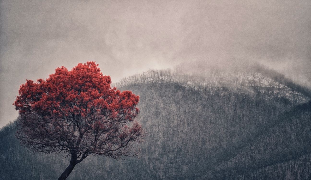 Burnt tree Snowy Mountains